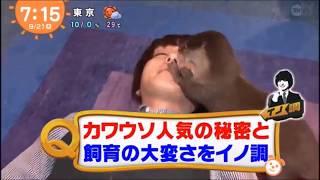 【カワウソちぃたん】テレビ出演❤Hey! Say! JUMP 伊野尾慧がカワウソの...