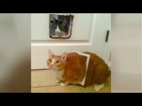 Funny CATS DESTROYING EVERYTHING on their way! - PREPARE to LAUGH SUPER HARD!