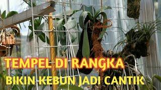 Kebun anggrek Flower Family Fun || tempel anggrek