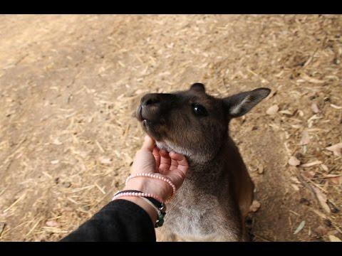 Australia solo travel - Viaggio In Australia - #FraintesainOz
