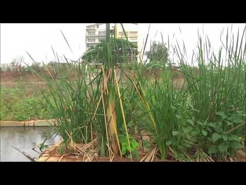 Neknampur Lake - A Model For Urban Lake Restoration BY Dhruvansh NGO