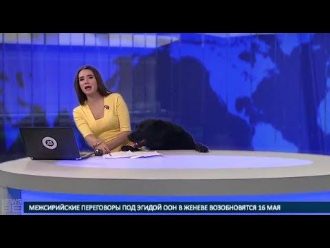 SITUAÇÕES ENGRAÇADAS durante reportagens ao vivo: parte 7