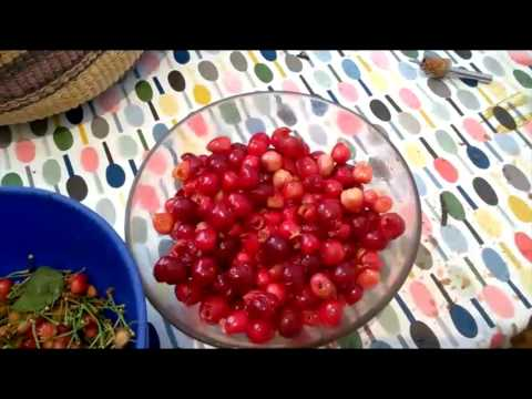 How to Make Cherry Jam from Wild Cherries