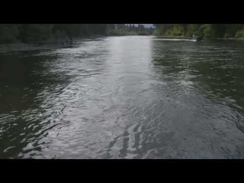 Rogue River Steelhead Quick Clip
