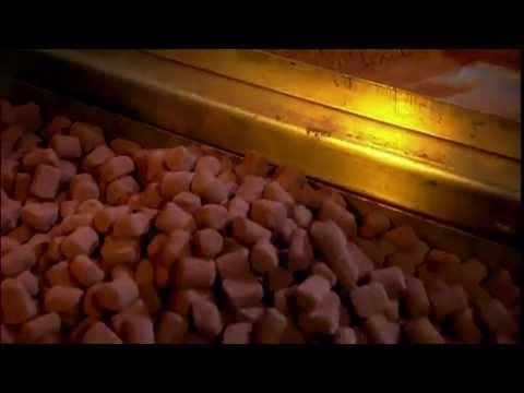 초콜릿 제조 과정 How to Make Chocolate
