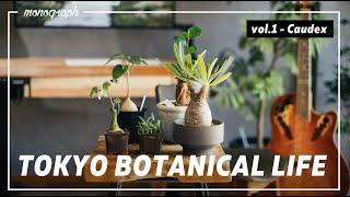 TOKYO BOTANICAL LIFE - vol.1 塊根植物(コーデックス)編