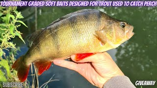 Perch fishing with tournament graded soft baits made by Petar Lakov at Grand Union Canal UK