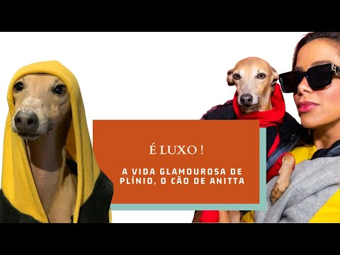 A vida glamourosa de Plínio, o cão de Anitta