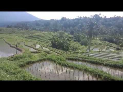 Rizières à Bali (Jati Luwih, Belimbing, Tegalalang, Sidemen, Kastala)