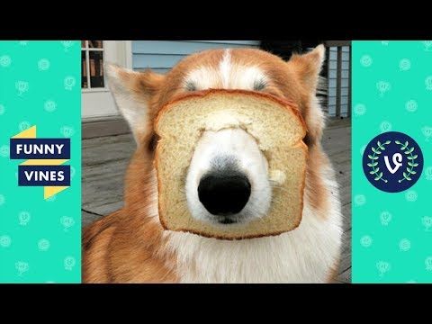Best ANIMALS FAILS Compilation 2018 - Funny Animal Videos | Funny Vines