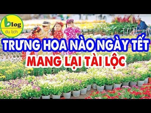 Người Việt Nam trưng hoa tết nào để cầu may mắn cả năm