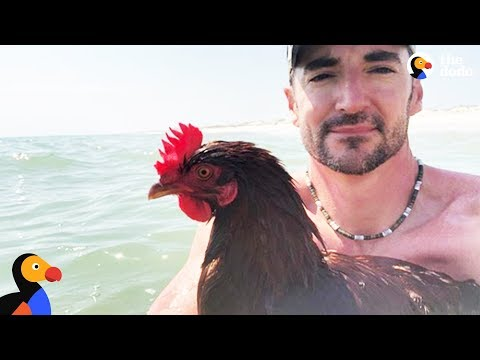 Swimming Chicken Helps Dad Cope with Losing His Best Friend - SAMMI | The Dodo