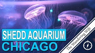 CHICAGO: Shedd Aquarium Tour & Review 🇺🇸  🐠 🦑 | TRAVEL VLOG #0089