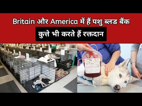 In Usa and Uk there are blood banks for pets