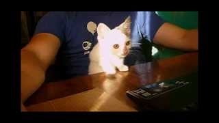 Котёнок слушает кошачьи песни