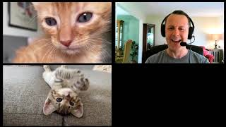 Hilarious zoom call with kittens