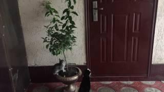 Много котов! Коты наступают! 😂Funny cat! Cat open the door!