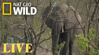 Safari Live - Day 61 | Nat Geo WILD thumbnail