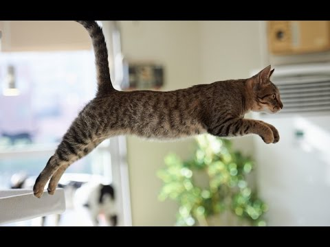 Funny Cat Jump Fail Compilation