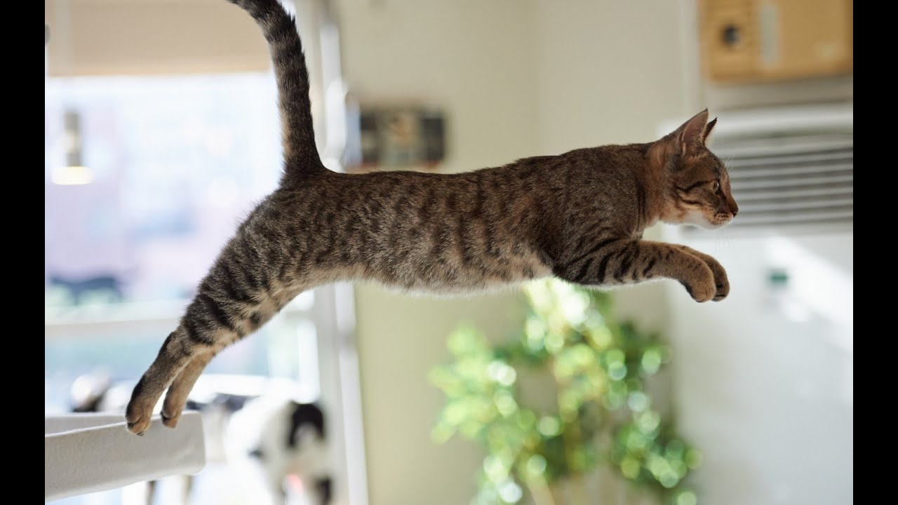 Cats That Don T Jump High