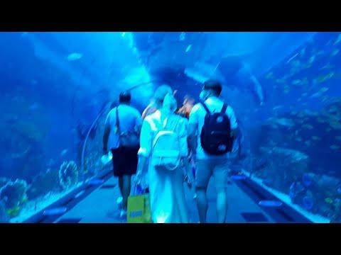 Dubai Aquarium 2021/Mr. Huge Crocodile and the Dragon..