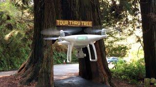Tour Thru Tree - by DRONE!! Klamath, CA