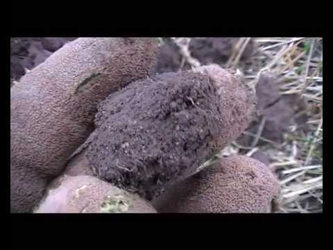metal detecting uk 30 .silver coins,,medievil