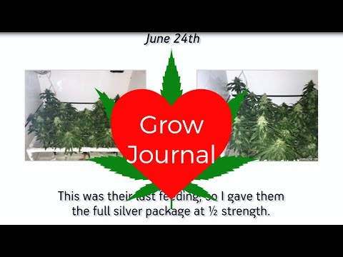 Grow Journal: Blooming White Widow in a BloomBox
