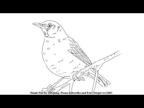 how-to-draw-a-bird-|-yzarts-|-yzarts