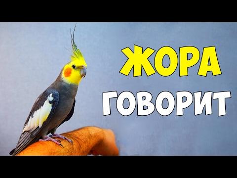 видео: ЖОРА - МОЙ ГОВОРЯЩИЙ ПОПУГАЙ КОРЕЛЛА