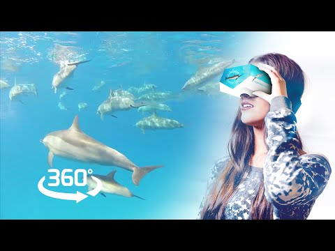 Swim with wild dolphins – a healing Virtual Reality experience – 360ºVR preview