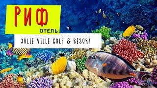 ЕГИПЕТ 2019. РИФ отеля Jolie Ville Golf & Resort/ Шарм-эль-Шейх