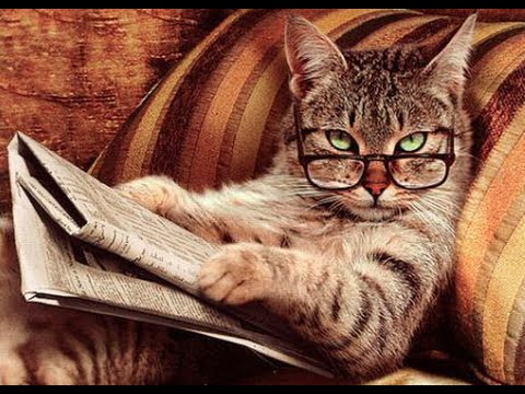 Top 10 smartest cat breeds