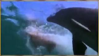 Dolphin saves dog in the sea