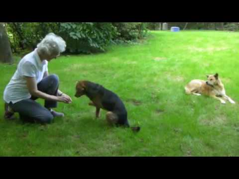 Dog Training Using Recaller Games Prevents Frustration And Despair!
