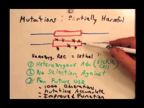 Day 27 Ob 1 (Genetic variation makes evolution possible) BIO 110