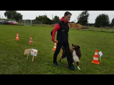 Rally Obedience Beginners - Training 19.08.2017