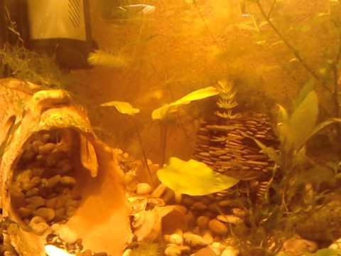 Aquarium in the studio