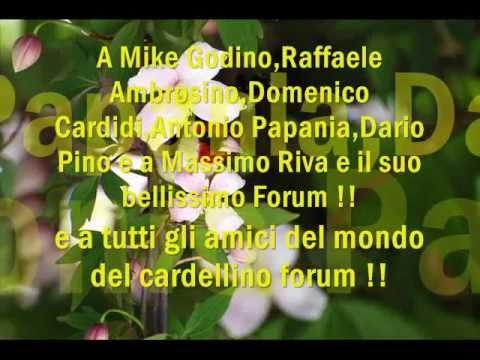 BUON ESTATE 2011 IL MONDO DEL CARDELLINO FORUM