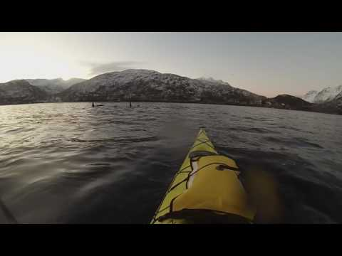 Kayaking with Orcas and Humpbacks in Tromso, Norway
