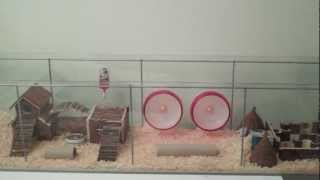 Huge Habitat For Roborovski Hamsters (from Ikea)