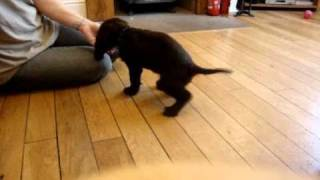 The First Lesson In Puppy Training When Using Food  - Manners!