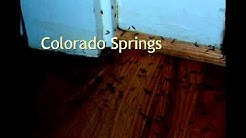 Bed Bug Steamer Colorado Springs Co Professional Bed Bug Removal