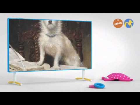 Curiosidades - Libros de perros - Más que perros y gatos 5