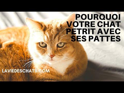 Pourquoi Votre Chat Pétrit Avec Ses Pattes ? 🐱