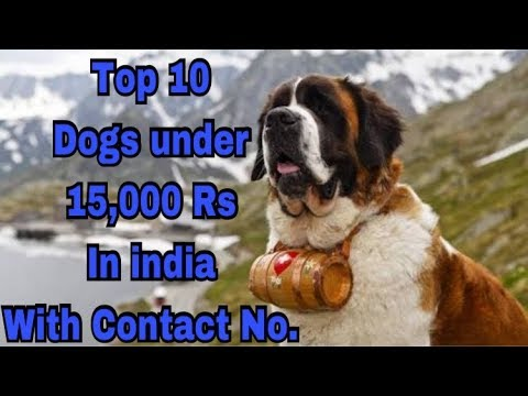 Top 10 Dogs under 15,000 in india with Contact No.||price in india ||.