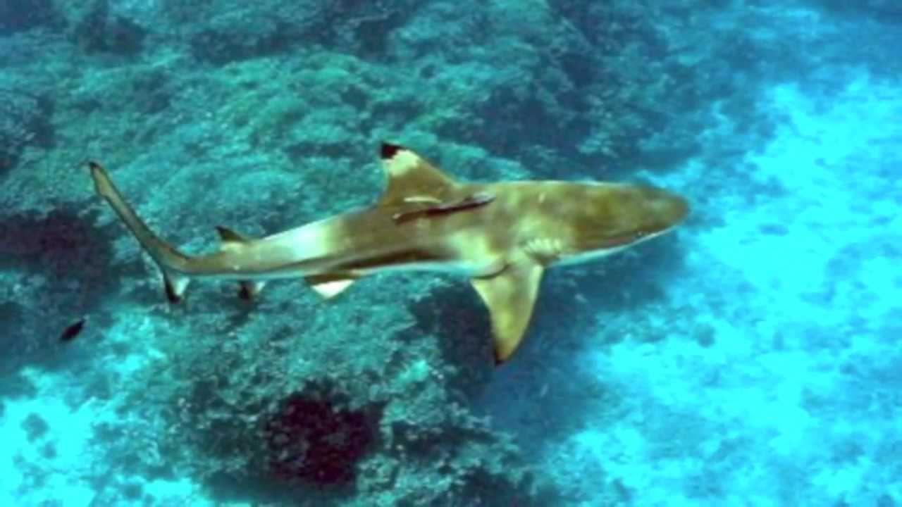 Snorkeling In Virgin Islands St Thomas