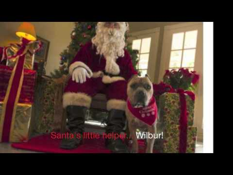 Holly Jolly Christmas Dog Song : Pit Bull Video : Dog Music