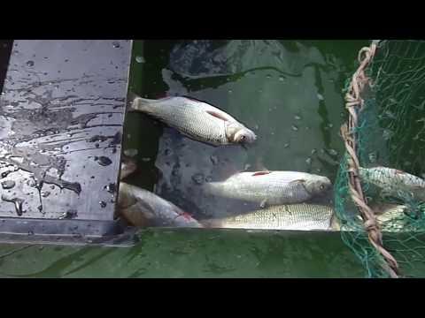 Снасть которая ловит любую рыбу. Перетяга.Наживка белый изюм.Активный клев.