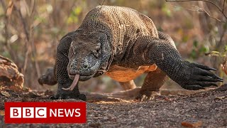 The fight for Dragon Island - BBC News